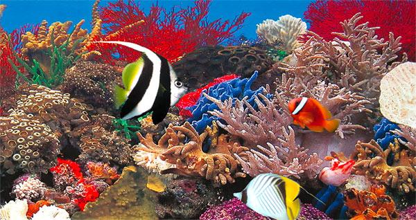 acuario marino
