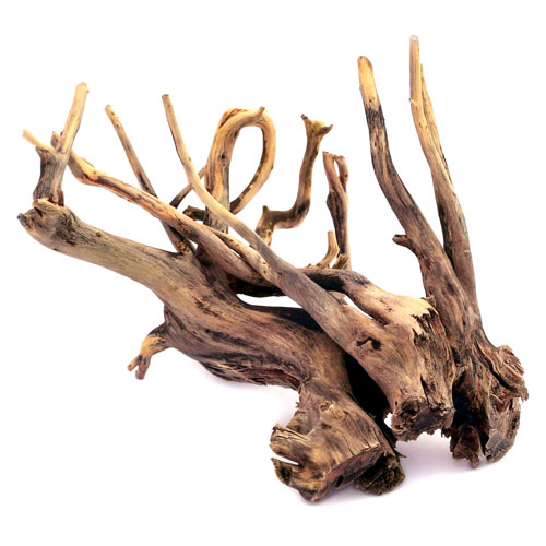 raices y troncos