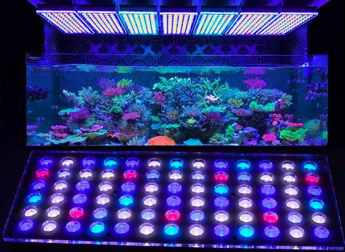 pantallas led acuarios
