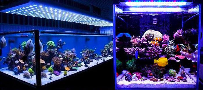 pantallas led acuarios marinos