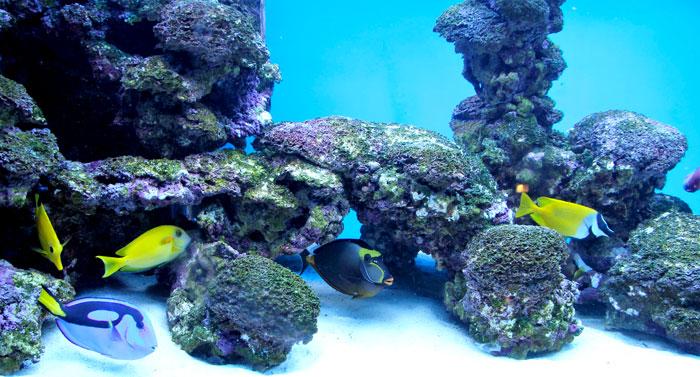 acuarios agua salada